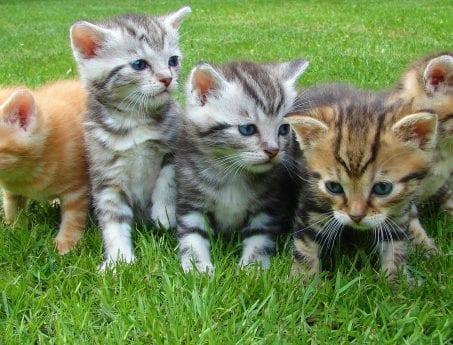 kittens-cat