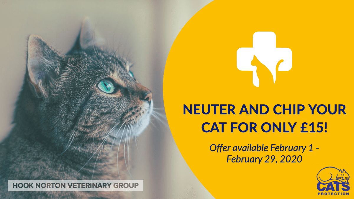 Neuter & chip your cat for only £15! - Hook Norton Veterinary Surgeons